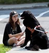 girl petting guide dog